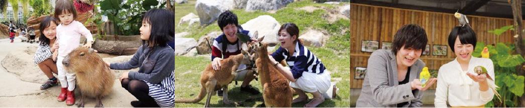 神戸どうぶつ王国 可愛い動物たちとのふれあい体験