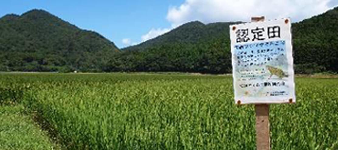 ツシマヤマネコ米を育てる畑の画像