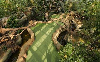 アジアの森