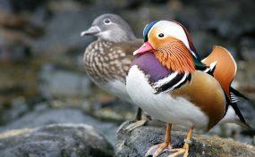 水鳥のおやつ