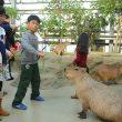kapibara_fureai_doubutuoukoku_2