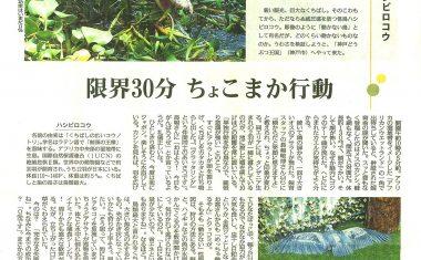 2016年09月10日 毎日新聞夕刊に当園のハシビロコウが紹介されました