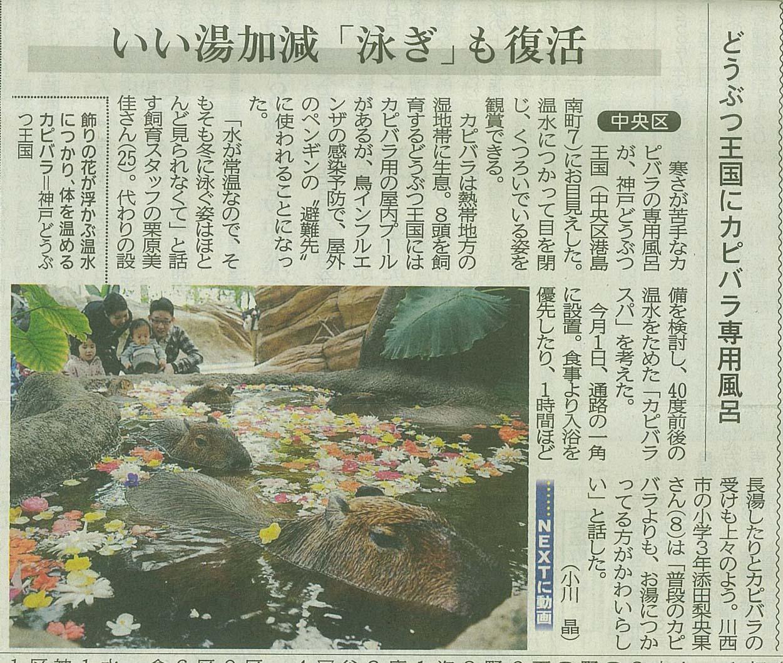 2017年1月10日 「カピバラスパ」が神戸新聞に紹介されました