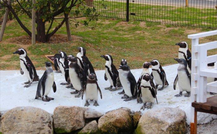 ペンギンウォーク2_R