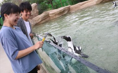 ペンギンおやつタイム
