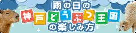 IMG_5142 (1)