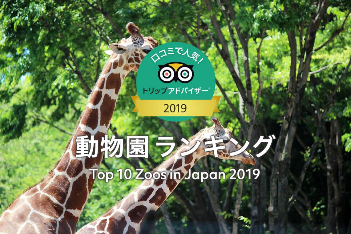 ■トリップアドバイザー「口コミで人気!日本の動物園 ランキング 2019」で神戸どうぶつ王国が4位に選ばれました