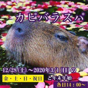 カピバラたちのお花のお風呂「カピバラスパ」12月28日(土)からスタート