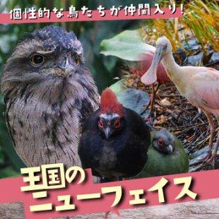 美しくもユニークな鳥たち