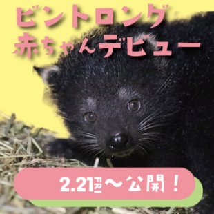 ビントロングの赤ちゃんが誕生! 2月21日(金)から親子で展示中♪ !