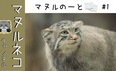 """【マヌルネコチャンネル】""""マヌルのーと"""" #1展示場の練習"""