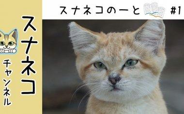"""【スナネコチャンネル】""""スナネコのーと"""" #1初の展示場"""