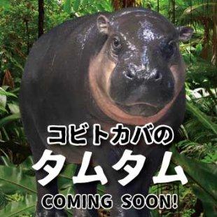 """王国へようこそ!コビトカバの""""タムタム""""(2020年7月18日更新)"""