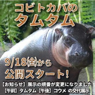 コビトカバのタムタム 9月18日(金)から公開スタート!(2020年9月25日更新)