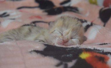 スナネコの赤ちゃん生まれました。