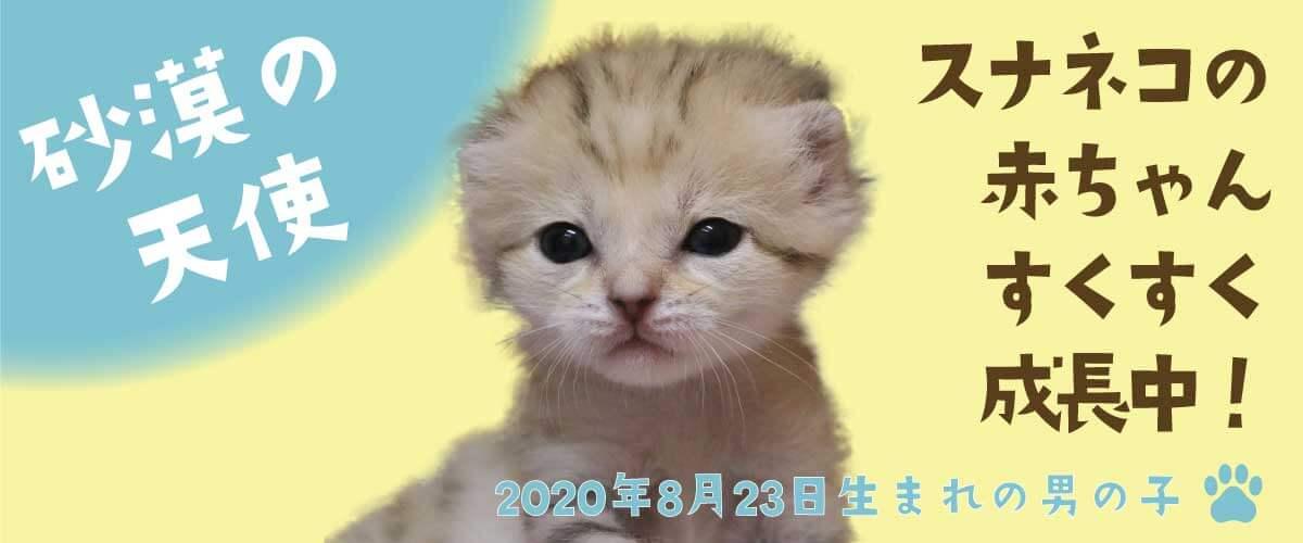 スナネコ赤ちゃん_スライド2_PC