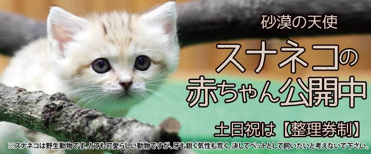 スナネコ赤ちゃん_公開スライド改2_PC