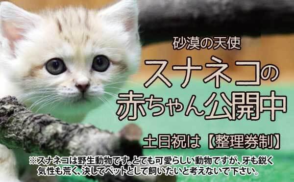 スナネコ赤ちゃん_公開スライド改2_MOV