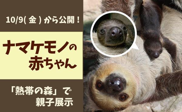ナマケモノ_MOV3