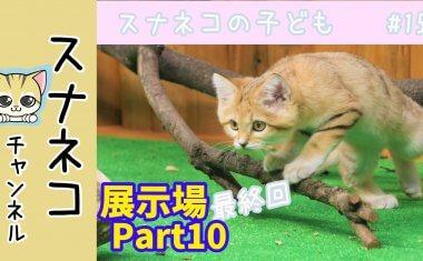 """【スナネコチャンネル】""""スナネコの子ども""""~最終回~  #15展示場Part10"""