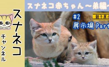 """【スナネコチャンネル】""""スナネコ赤ちゃん""""~弟編 #2展示場Part2~"""