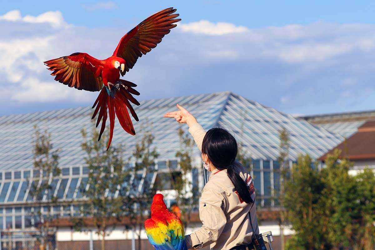 6月4日(金)~6月20日(日)「土・日曜日」のみ「フリーフライトバードパフォーマンス〝Wings(ウイングス)〟」開催回数の変更のお知らせ