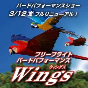 【NEW】3/12(金)〜 バードパフォーマンスショー フルリニューアル!『フリーフライトバードパフォーマンス 〝Wings(ウィングス)〟』開幕!(3/2更新)