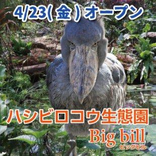4/23(金) 新エリア「ハシビロコウ生態園 Big bill(ビッグビル)」オープン!(7/11更新)