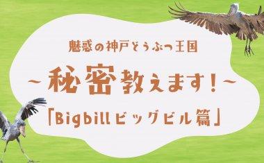 魅惑の神戸どうぶつ王国~秘密教えます!~「Big billビッグビル篇」【クラウドファンディング】