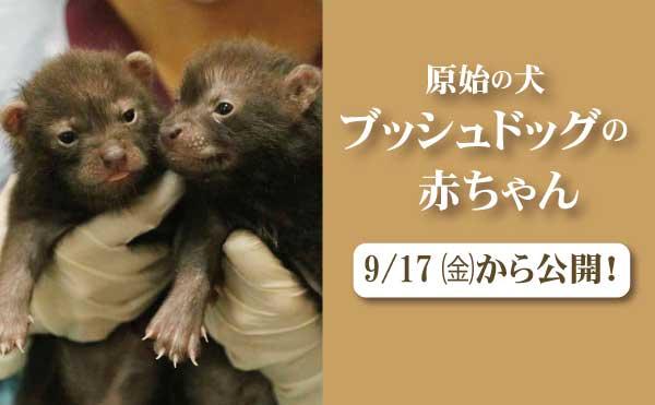 ブッシュドッグ赤ちゃん_公開スライド_MOV