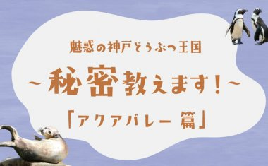 【Youtube】魅惑の神戸どうぶつ王国~秘密教えます!~第4弾「アクアバレー篇」