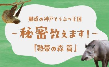 【Youtube】魅惑の神戸どうぶつ王国~秘密教えます!~第5弾「熱帯の森 編」