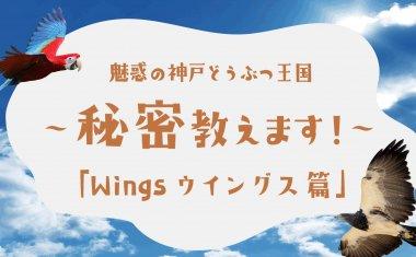 【Youtube】魅惑の神戸どうぶつ王国~秘密教えます!~第6弾「Wingsウィングス 編」